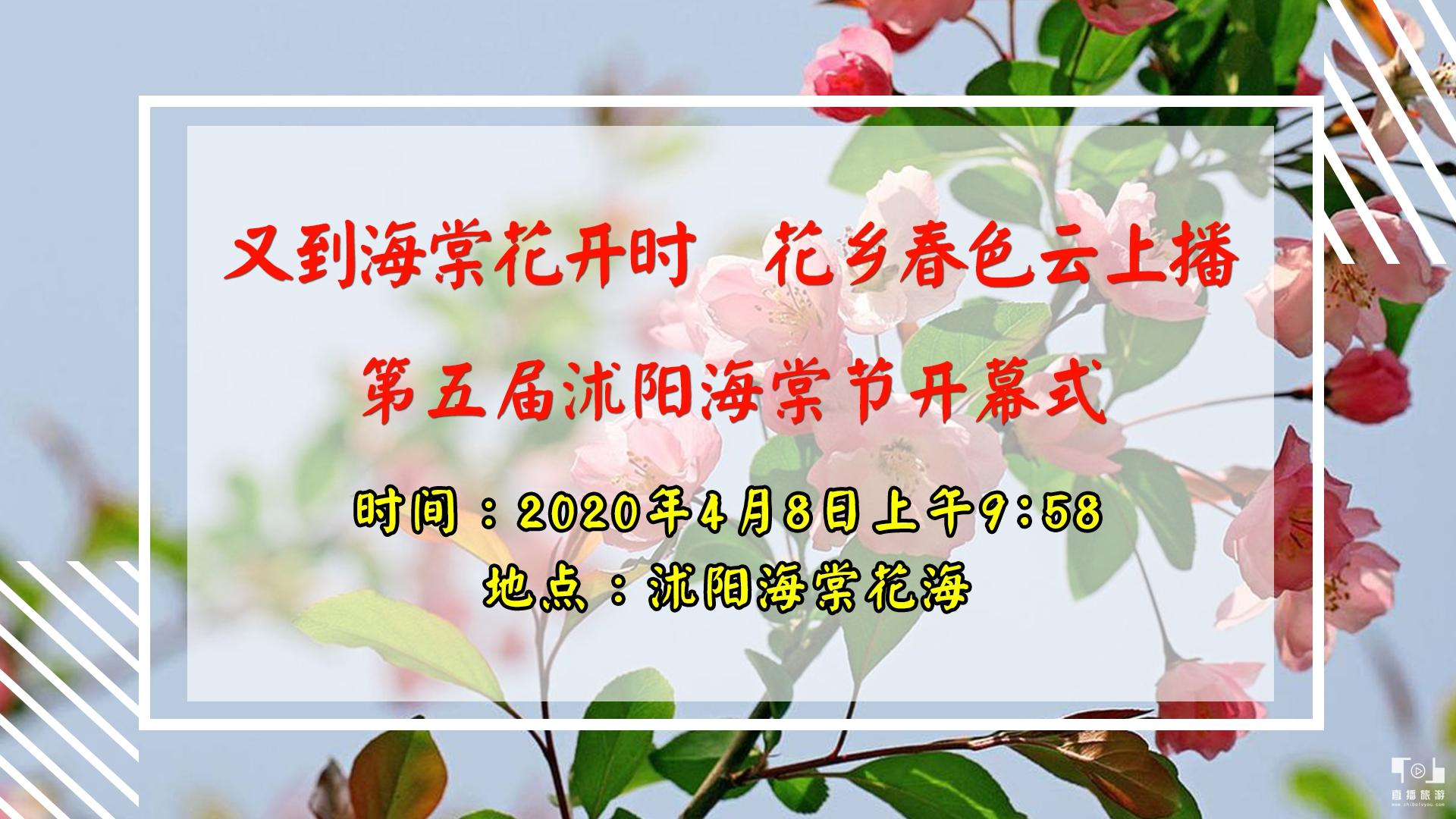 又是海棠花开时 花乡春色云上播 【第五届沭阳海棠节开幕式】