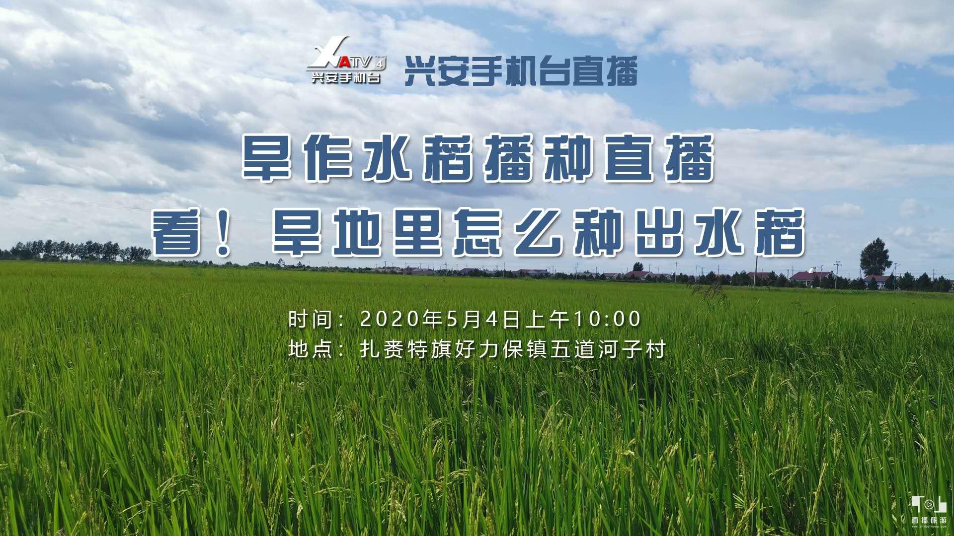 扎赉特旗旱作水稻播种直播